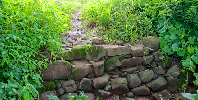 Over the rocks, into the greenery beyond