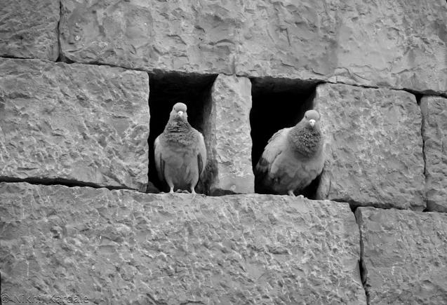 Monochrome - Pigeonholes
